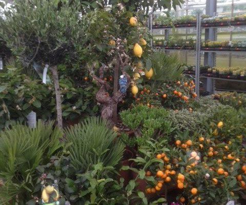 butik_citrus